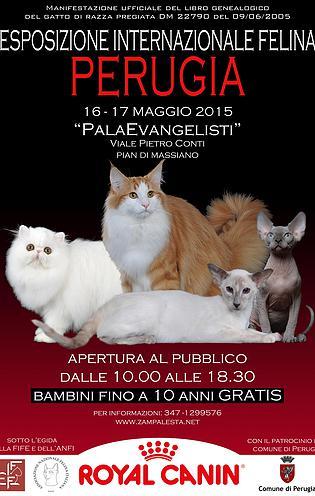 esposizione internazionale felina