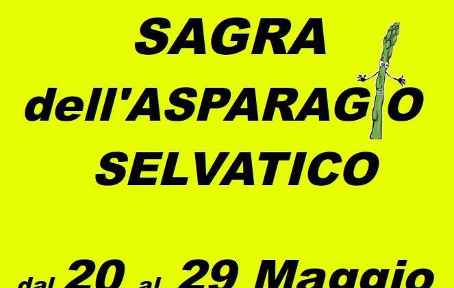 sagra asparago