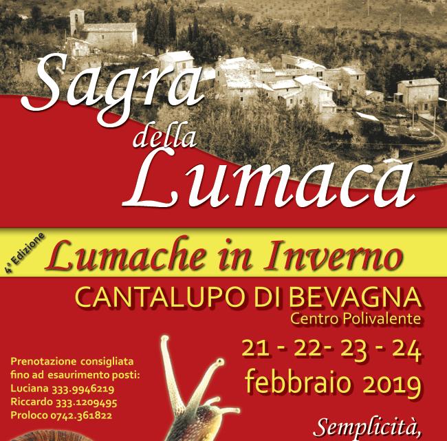 lumache-inverno-2019