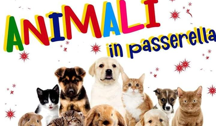 animali-in-passerella