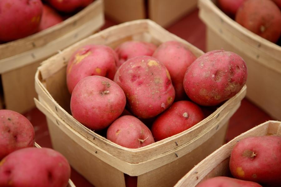 patata-rossa-colfiorito