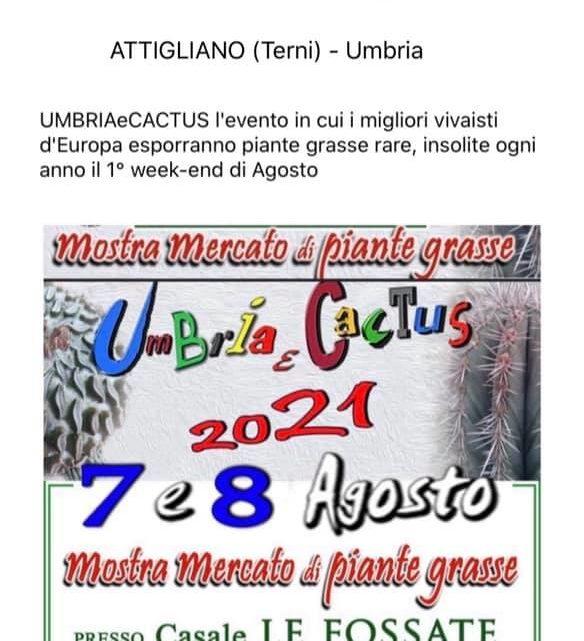 umbria-cactus-2021